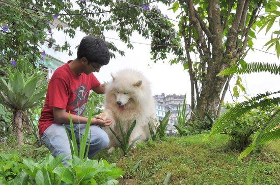The Elgin Nor-Khill, Gangtok: Simoyed dogs at Elgin Nor Khill