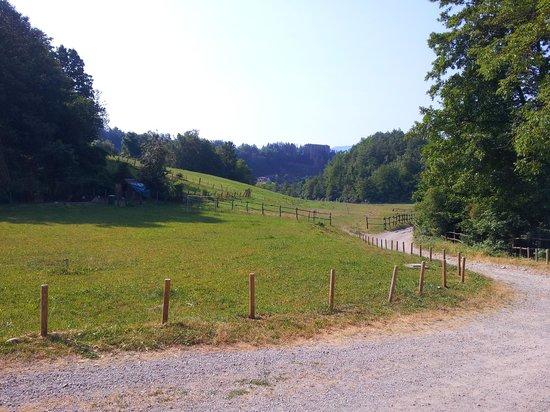 Agriturismo Carovane: Viale d'accesso all'agriturismo