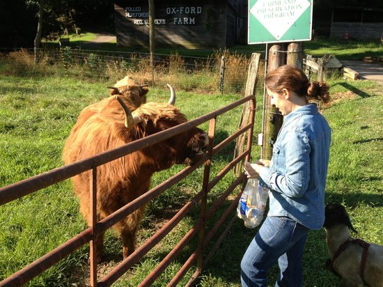 Ox-Ford Farm Bed & Breakfast Inn: feeding the animals