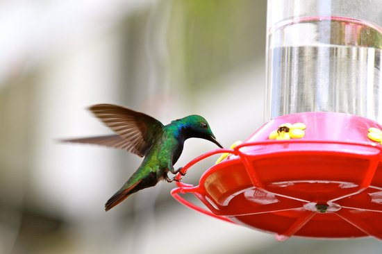 Yerette : These simple feeders attract hundreds of birds...