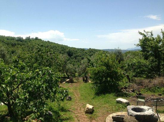 Italy Farm Stay: backyard