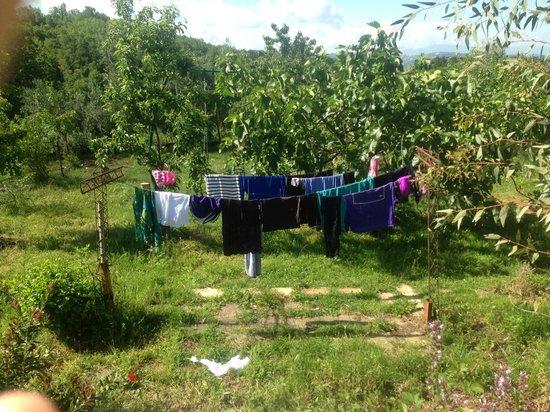 Italy Farm Stay: backyard clothesline