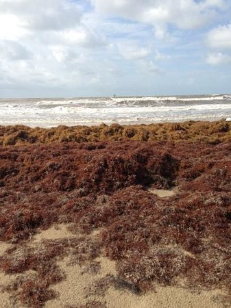 Crystal Beach, TX: Just a little seaweed. Freak occasion.