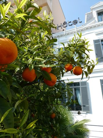 Hotel Pruly: l'oranger du jardin