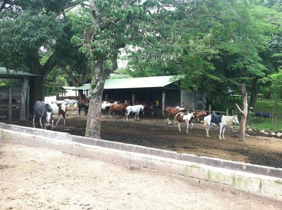 Buena Vista Lodge&Adventure: horses