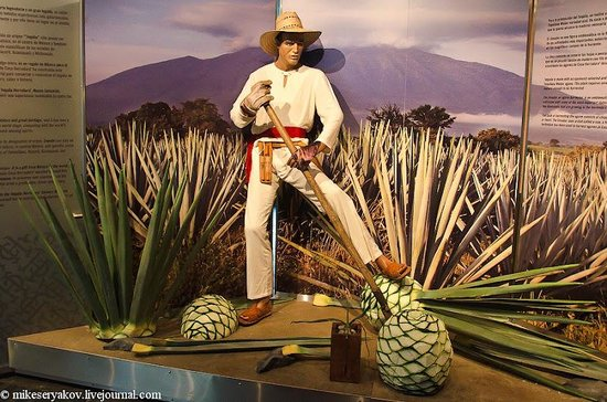 Museo Sensorial del Tequila
