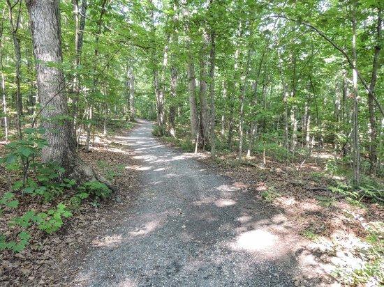 Edith J. Carrier Arboretum : One of the woodland walks