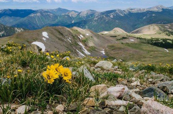 Wheeler Peak Wilderness Area: Near the top
