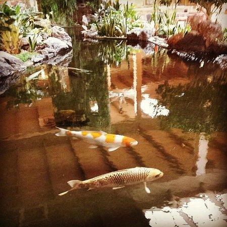 Crowne Plaza, Suffern: Koi pond in lobby