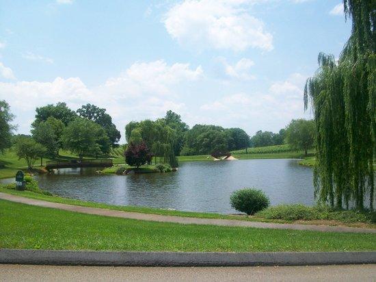 Shelton Vineyards : Lake with walking trail