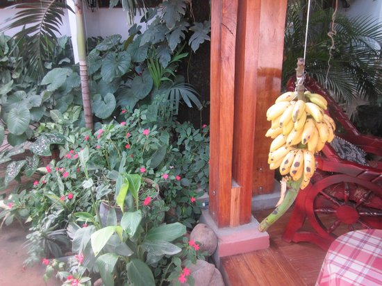 Hotel Javy: Many fruits and plants!