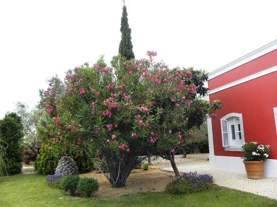 Quinta da Cebola Vermelha: Esterno e giardino