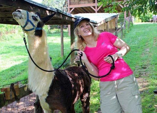 Applewood Inn, Llama Trekking & Cottage: Happy the llama before our trek.