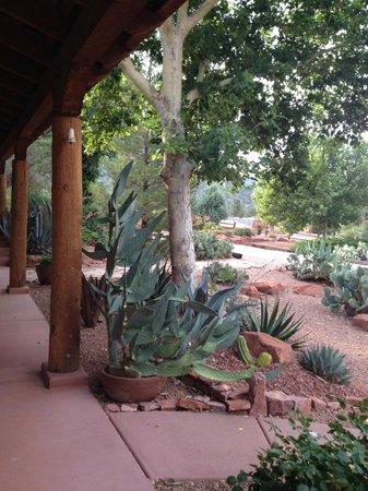 Adobe Hacienda Bed & Breakfast: View of cactus garden