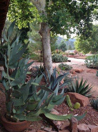 Adobe Hacienda Bed & Breakfast: Cactus garden