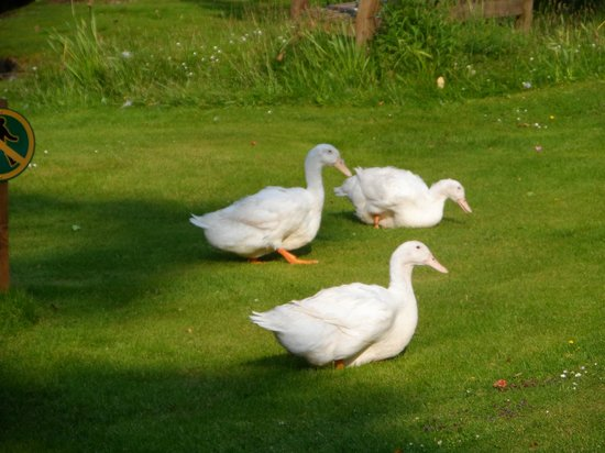 Lazy Duck Hostel, Eco Cabins & Lightweight Camping Ground: Lazy ducks