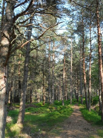 Lazy Duck Hostel, Eco Cabins & Lightweight Camping Ground: Forest walk