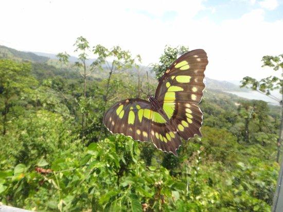 The Motmot Jungle: beautiful