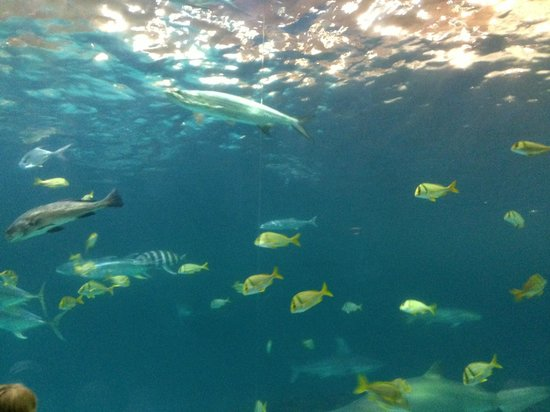 North Carolina Aquarium on Roanoke Island: Shark tank