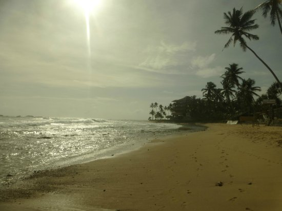 Hikka Tranz by Cinnamon : beach