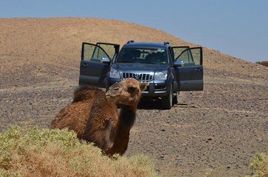 Ligne d'Aventure - Day Tours: Desert camel