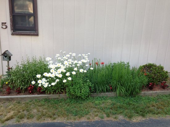 Hanmer's Riverside Resort & Livery : Flowers