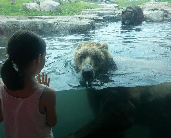 Minnesota Zoo: Grizzly Bears