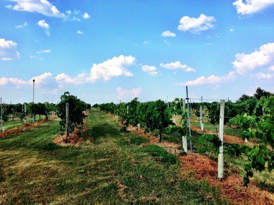 Messina Hof Winery: Messina Hof Vineyard