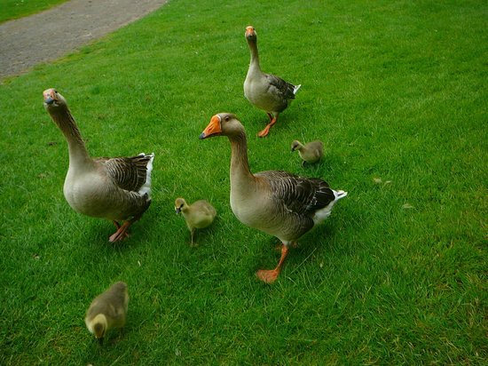 Monk Park Farm Visitor Attraction