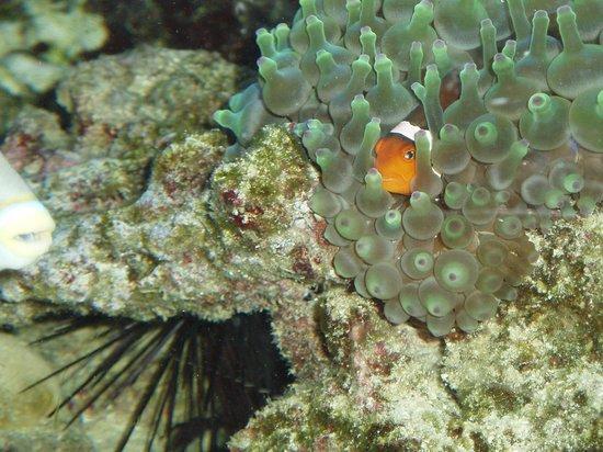 Le Paradis Marin : aquarium