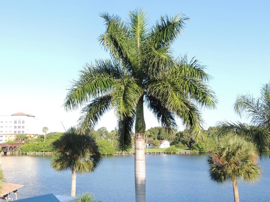 Crane Creek Inn Waterfront Bed and Breakfast : Stunning Palm trees