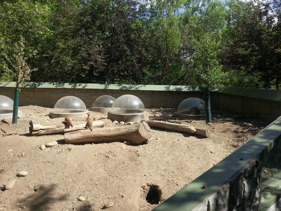 Zoo Boise: Prairie Dog town with plastic hoods for kids to pop up in and see the dogs close up