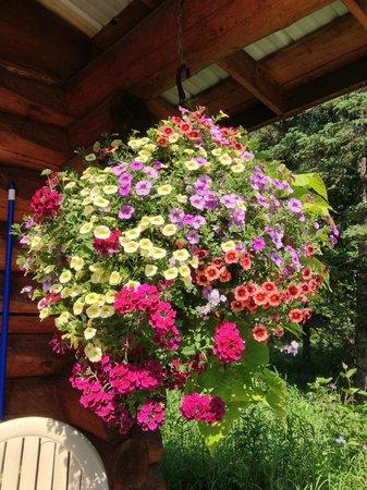 Hatcher Pass Bed & Breakfast: Flowers on cabin porch
