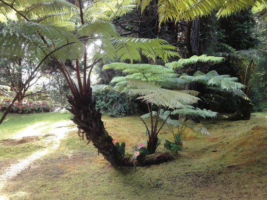 Volcano Country Cottages: tropical garden