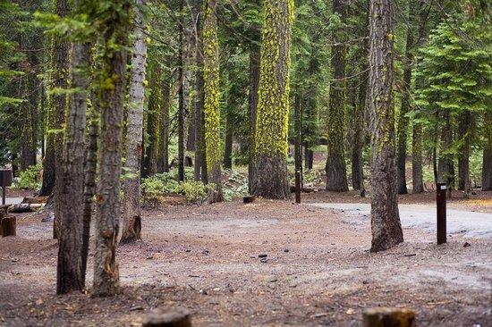 Crane Flat Campground: campground
