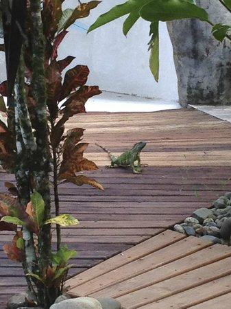 Casa Renada: One of the friendly visitors