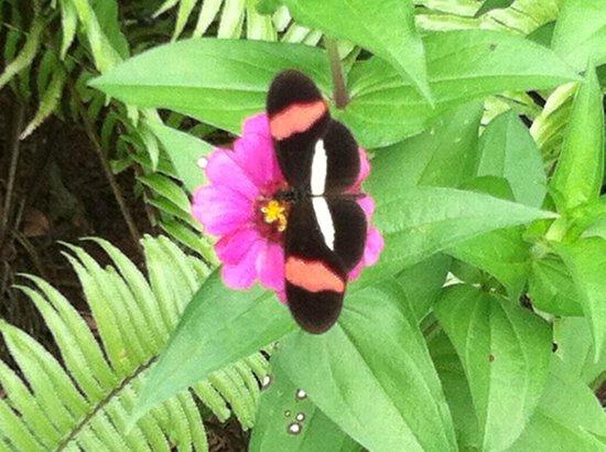 Casa Renada: Butterfly in gardens
