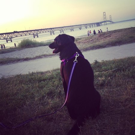 Fairview Beachfront Inn & Waterpark: Olive waiting for the sunset