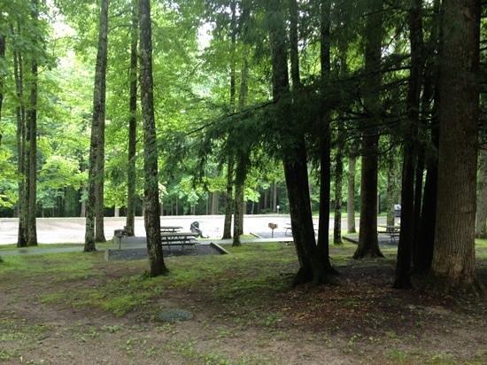 Cosby Campground: Picnic area