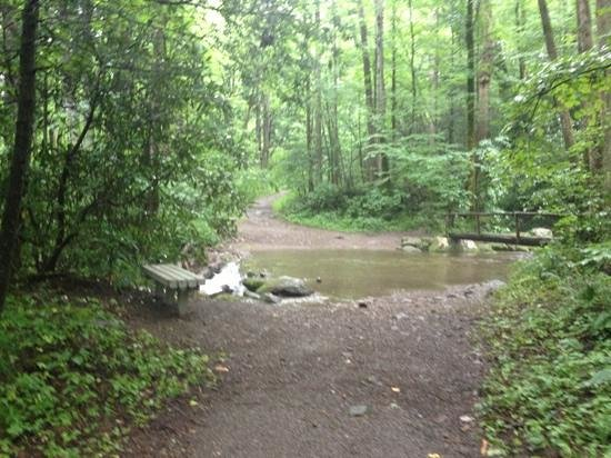 Cosby Campground: Nearby stream