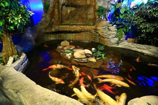 Koi picture of seaport aquarium wildwood tripadvisor for Coy fish tank