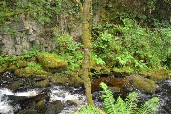 Torc Mountain Walk: Incredible Sights At Torc Falls