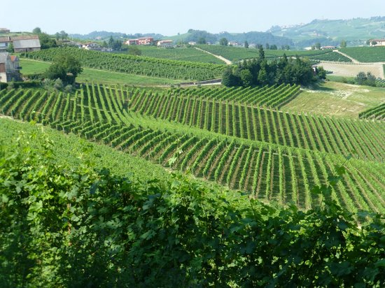 Piedmont Food and Wine - Day Tour: Amazing views all day long!