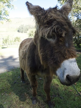 Hacienda Manteles: Rasta the pony / donkey