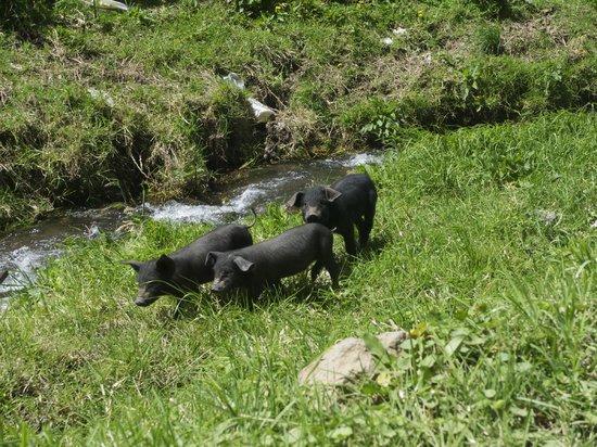 Hacienda Manteles : Farm animals