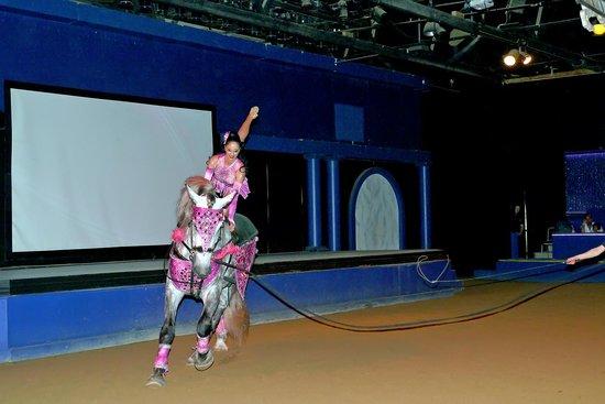 The Dancing Horses Theatre: Tina!