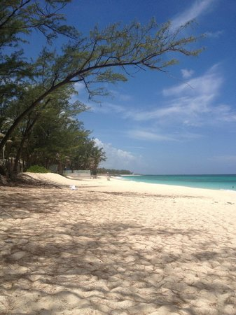 Sivananda Ashram Yoga Retreat: sivananda bahamas