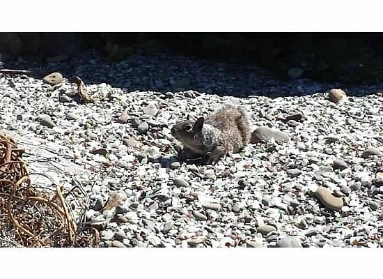 Glass Beach: Squirrels like it here, notice the rusted who knows what on the left, watch your step!
