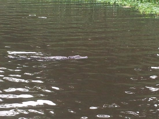 Huntsville State Park : gators