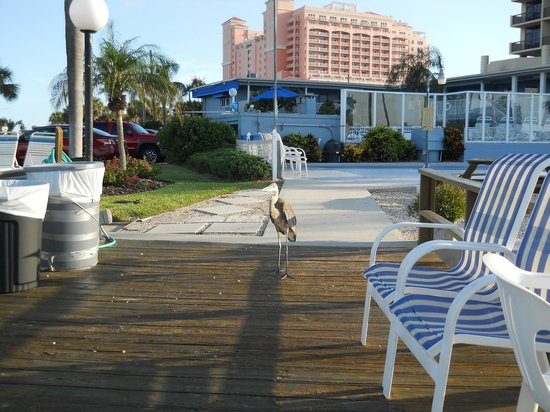 Sea Captain Resort on the Bay: View from dock and semi-resident Grey Heron